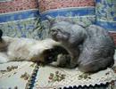 寝転んだままじゃれたい猫