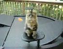 【ニコニコ動画】投げられたお菓子をキャッチして食べる猫を解析してみた