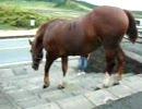 【ニコニコ動画】階段を下りる馬を解析してみた