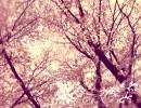 【ニコニコ動画】【NNI】春に通う【春ニカ祭2013】を解析してみた