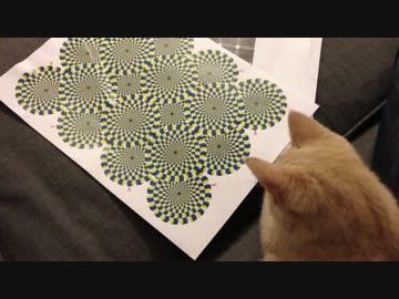 ネコに錯視画像を見せたらこうなった