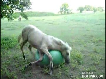 馬にバランスボールを与えたらすごい楽しそう