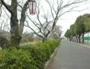 下松市切戸川河川公園の桜を撮ってみた<20130324>
