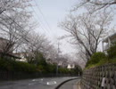 桜を撮ってみた動画。山口県周南市<20130326>