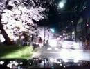 京都下木屋町さくらライトアップ