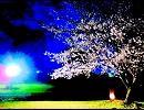 【青龍】Sakura Allegiance【リスペクト】