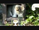 【ニコニコ動画】お花見中の猫神さまを解析してみた