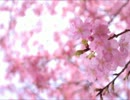 【ニコニコ動画】【SDVX落選供養】Spring Cometrue【SDVXⅡ】を解析してみた