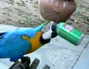【ニコニコ動画】ベンチでジュースを飲んでいるとインコにカツアゲされた。を解析してみた