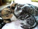 【猫】布団を取られた