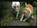 【ニコニコ動画】野良猫の弱弱し過ぎる威嚇を解析してみた