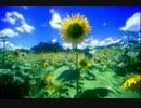 【クロル】コラボって歌ってみた - あの花OP「青い栞」【みさみさ】