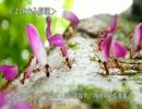 【ニコニコ動画】ゆっくり動物雑学「キノコを栽培する…」を解析してみた