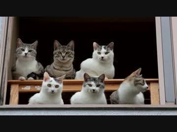 猫にガン見されるってどんな気持ち?総勢6匹の猫に12つの目で見られるとどんな気持ち?