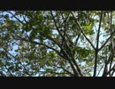 【ニコニコ動画】【自然を食べよう!】秋のどんぐりづくし(β試験版)編 3/4を解析してみた