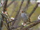 自然音 小鳥 その1 再up thumbnail