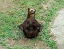 【ニコニコ動画】熊が誘ってきた(*´ω`*)を解析してみた