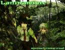 【ニコニコ動画】【東方Vocal】 Laninamivir / Vo.めらみぽっぷ 【緑のサナトリウム】を解析してみた