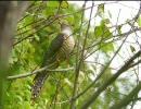 【ニコニコ動画】自然音 小鳥 その2 再upを解析してみた
