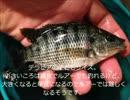 【ニコニコ動画】【かーびーの釣り日記】⑨テラピア釣って食べてみたを解析してみた