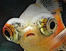 仄暗き沼と、人魚の悪事に恐怖する。『人魚沼』実況プレイ(2) thumbnail