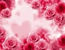 【ニコニコ動画】っバラを解析してみた