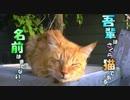 【ニコニコ動画】吾輩はさくら猫である。名前はまだない。【魚くれくれ野良猫】を解析してみた