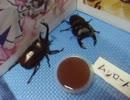 【ニコニコ動画】真夏の昆虫採集2013(後編)【グダあお10】を解析してみた