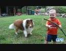 【ニコニコ動画】赤ちゃんとワンちゃんを解析してみた