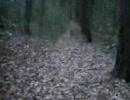 【ニコニコ動画】大沢の森を歩いてみたを解析してみた