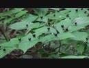 【自然を食べよう!】脱飢饉!夏のタマゴ