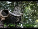 【ニコニコ動画】【アカリョシカ】A Day in Jungle【オリジナル曲】を解析してみた