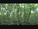 【ニコニコ動画】エゾゼミの鳴き声を解析してみた