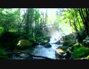 【ニコニコ動画】【日本一週釣行脚】Part7 長野県~渓流のエサ釣り編~を解析してみた