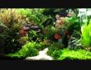 【ニコニコ動画】続・小道のある水草水槽を解析してみた