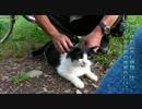 【ニコニコ動画】ツンデレ「小夜」が人懐こい理由。【魚くれくれ野良猫】を解析してみた