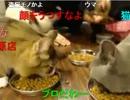20131112 暗黒放送Q 猫カフェでミニラの誕生日にやってきた放送