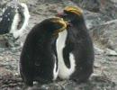 ペンギン好きはここで止まれ。
