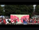 【東大生が】千本桜【踊ってみた】2012年駒場祭