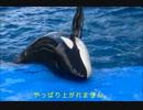 """【ニコニコ動画】シャチの赤ちゃん (名前は""""リン""""。メス。) / 名古屋港水族館を解析してみた"""