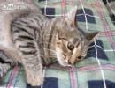 【ニコニコ動画】高速で動く猫ちゃんを解析してみた