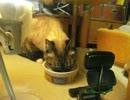 【ニコニコ動画】ジャンくんに初めての焼き魚を! 勿論塩抜きでを解析してみた