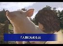 【新唐人】愛国豚