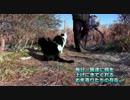 【ニコニコ動画】ホームレスさんとお年寄りと猫達の絆【魚くれくれ野良猫】を解析してみた