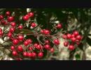 冬の木花の撮影テスト(高画質版)
