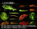 【ニコニコ動画】ゆっくり動物雑学「蛍光で…」を解析してみた