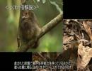 【ニコニコ動画】ゆっくり動物雑学「卵を抱かない…」を解析してみた