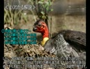 【ニコニコ動画】ゆっくり動物雑学「孵化前の温度で…」を解析してみた