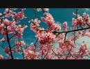 【ニコニコ動画】2014-03-04 河津桜ツーリングを解析してみた