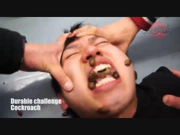 Cockroach challenge ゴキブリ耐...